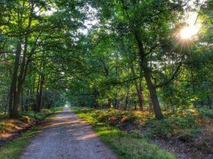 Forêt de Sénart : début de la saison de chasse jeudi 21 octobre 1